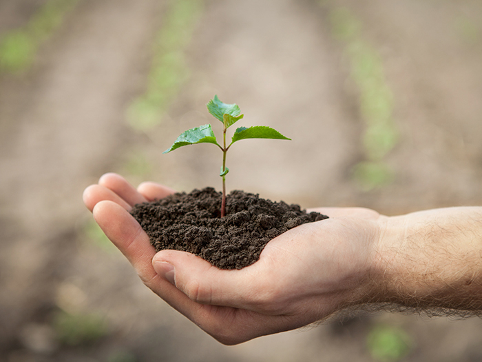 Hands holding sapling with soil  on green background